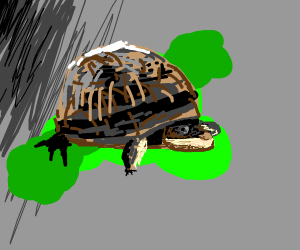 Shiny turtle