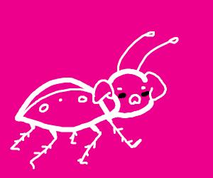 Pig/Beetle chimera. Thanks, Porky.