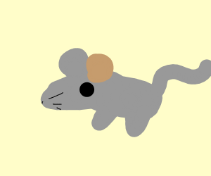 grey mouse with a brown ear