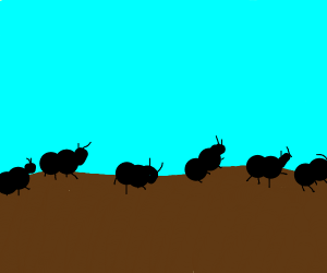 a trail of ants