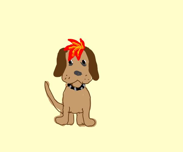 edgy dog
