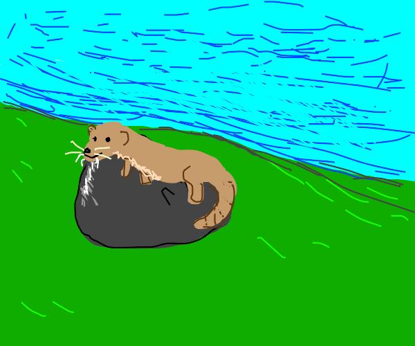 Little otter on a rock!