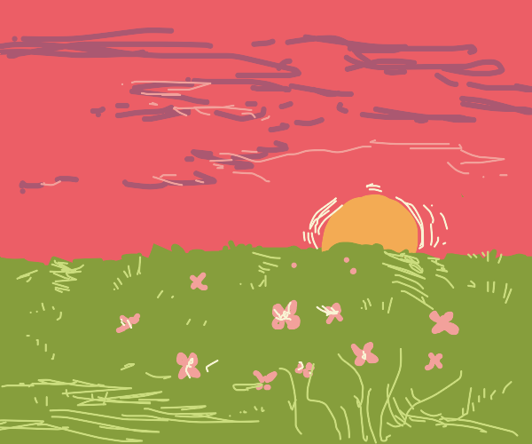sunset in a field of pink flowers