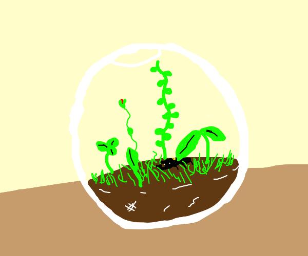 A Spherical Terrarium