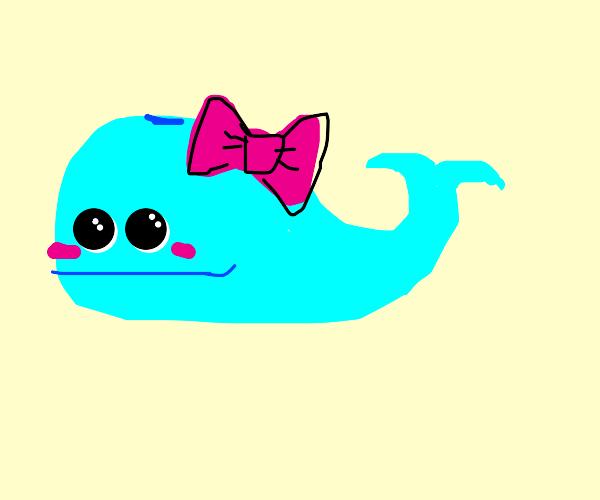 A cute lil whale