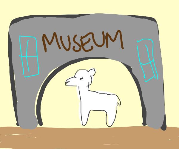 Llama Museum
