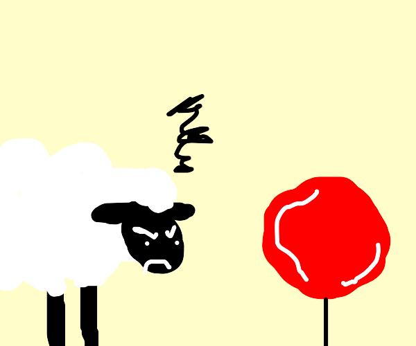 A sheep doesn't like a lollipop