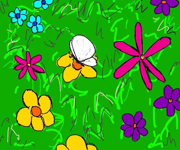 butterfly in a gaurden