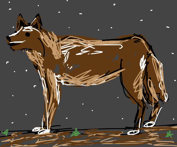 wild dingo is happy