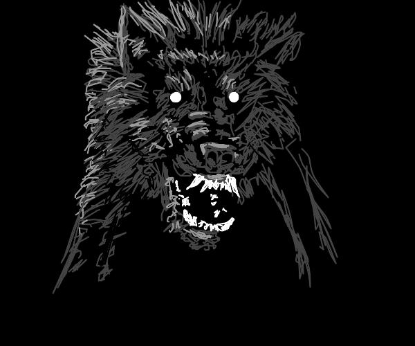 Unfriendly wolf