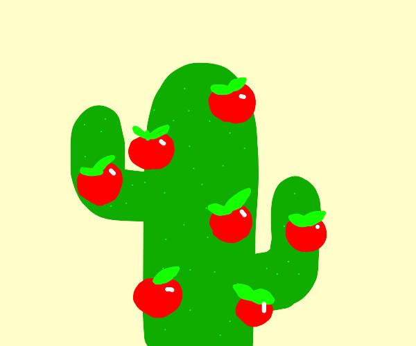 Cactus growing apples