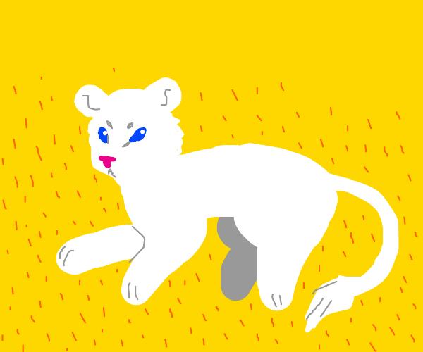 White female lion (?)