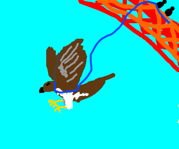 Hawk Bungee Jumping
