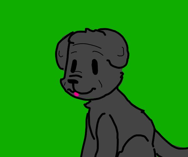 neapolitan dog