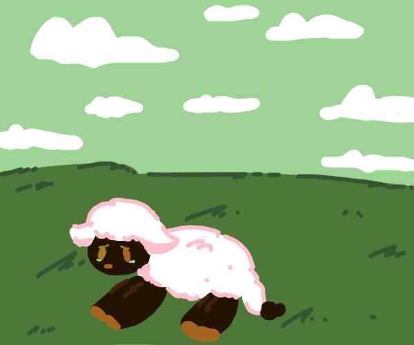 Sad sheep laying in grass