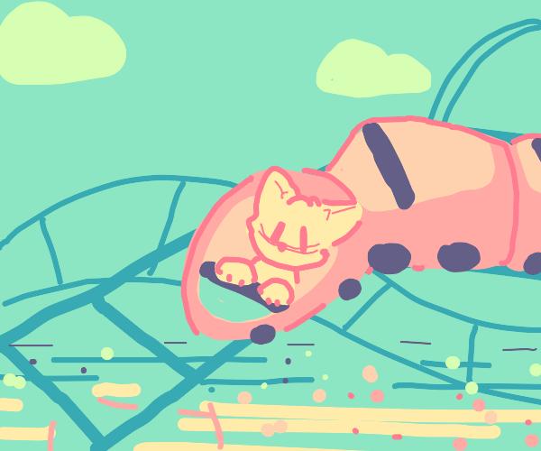 kitten going down a rollercoaster