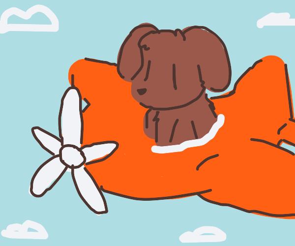 dog flying in plane