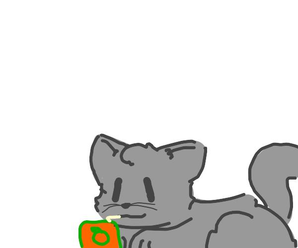 Grey cat enjoy orange juic e