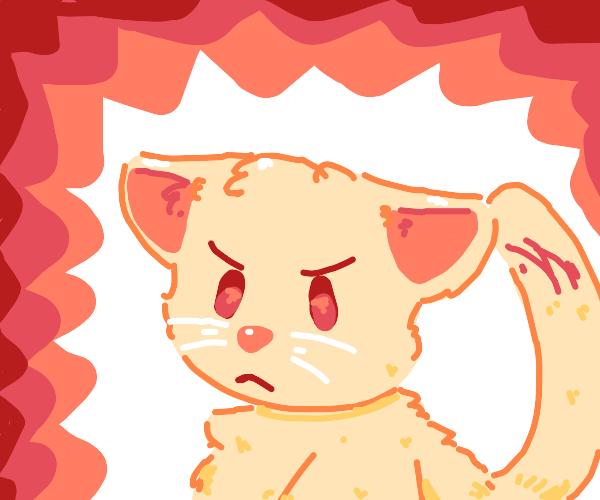 Angery Kitty