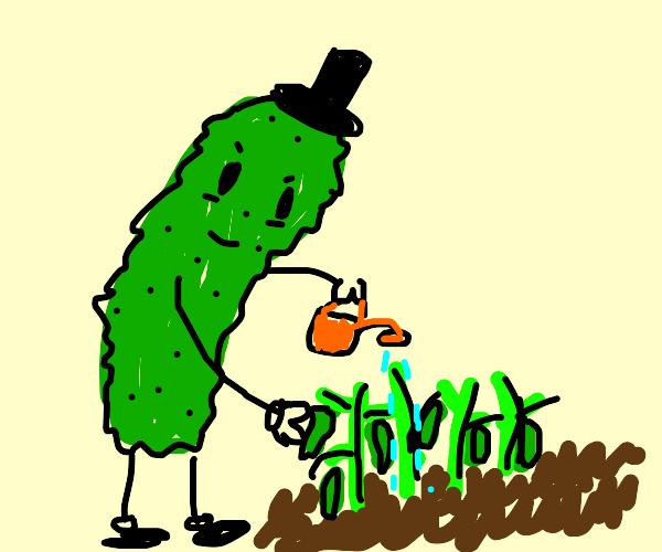 A cucumber plants a cucumber