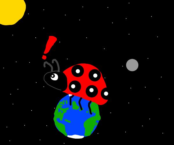 Giant LadyBug Exploring