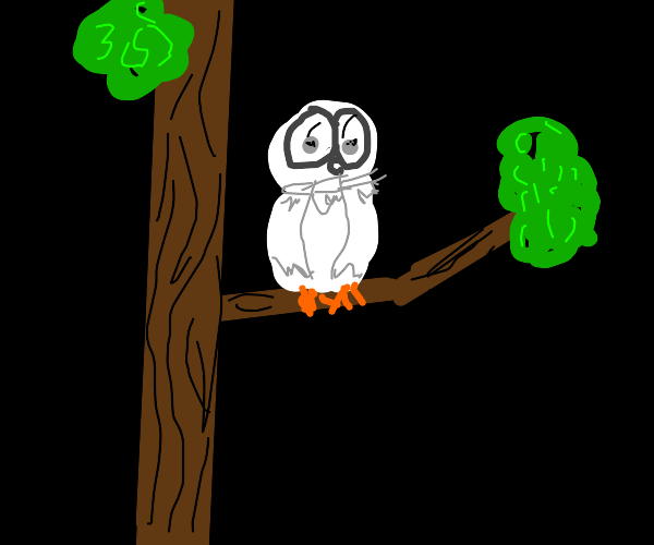 Owl states at you