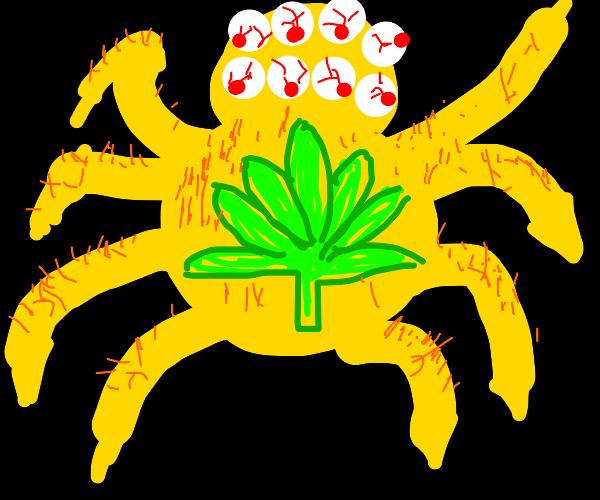 drugged up yellow spider