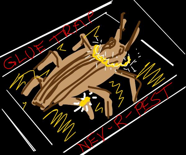 Rich cockroach