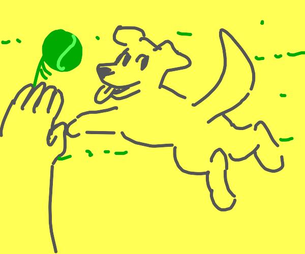 doggo plays fetch
