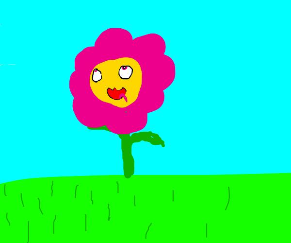 OwO flower ahegao