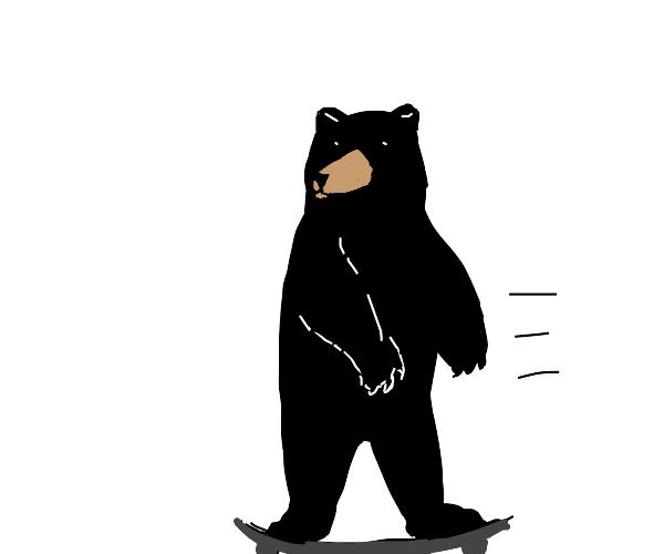 Bear riding a skateboard
