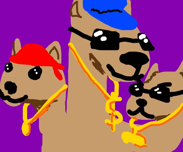3 headed dog has got that DRIP