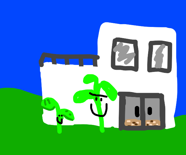A modern house with happy plant-life