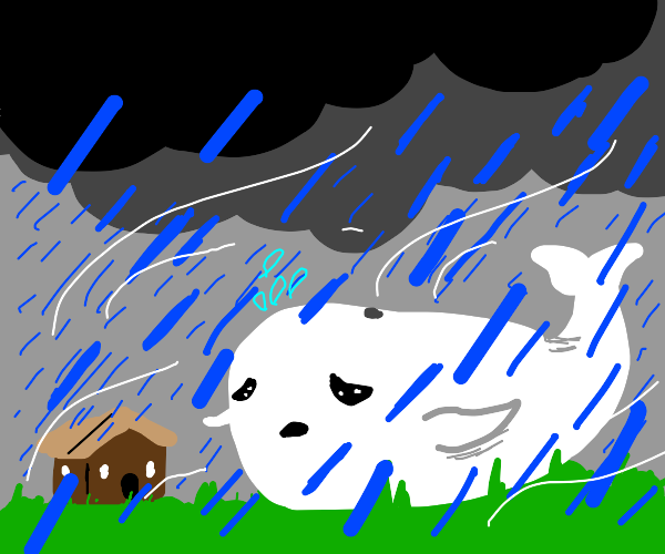 Whale in a Monsoon