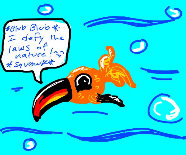 toucan+goldfish=toufish(The BEST animal)