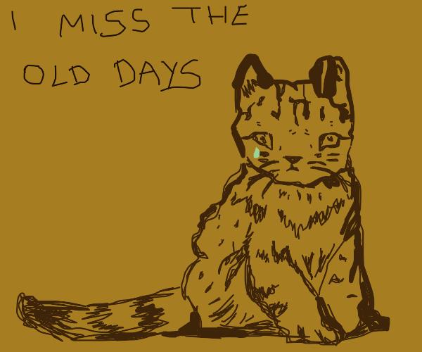 Brown cat feels old