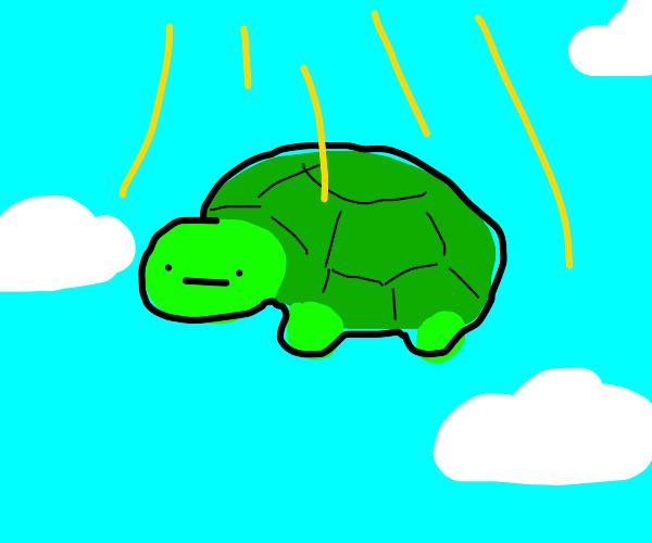 Ascending turtle
