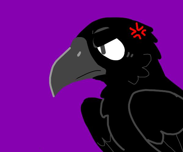 A raven glaring at something