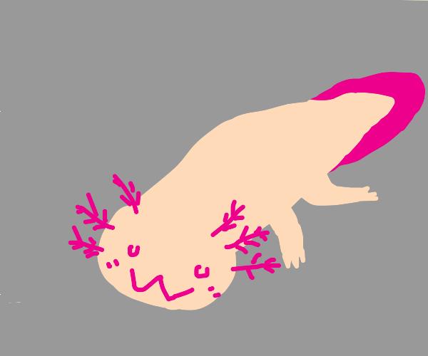 uwu axolotl smile