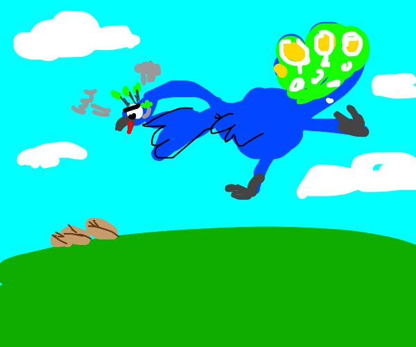 peacock angry at seed