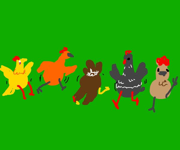 Chicken line-dancers