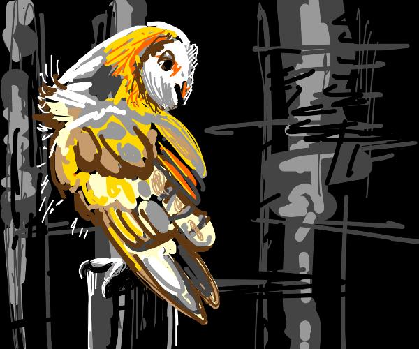 a cool bird
