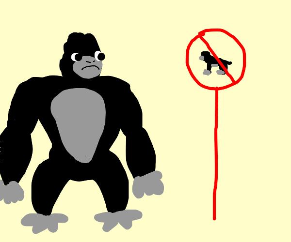 no gorillas brn