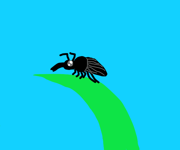 A cute little weevil