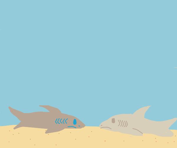 Sharks on sand