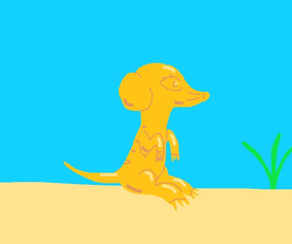 Golden Meerkat