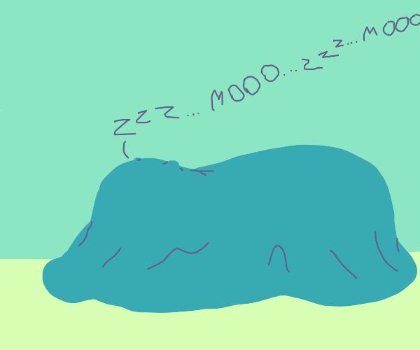 Cow sleeping under a blanket