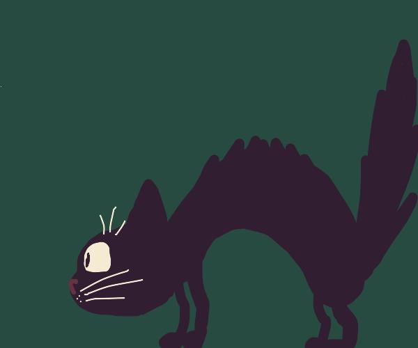 Black cat is surprised