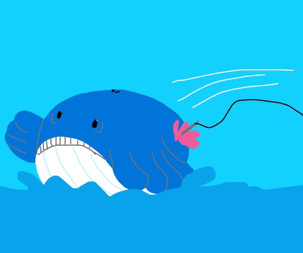 Whale pokemon gets harpooned