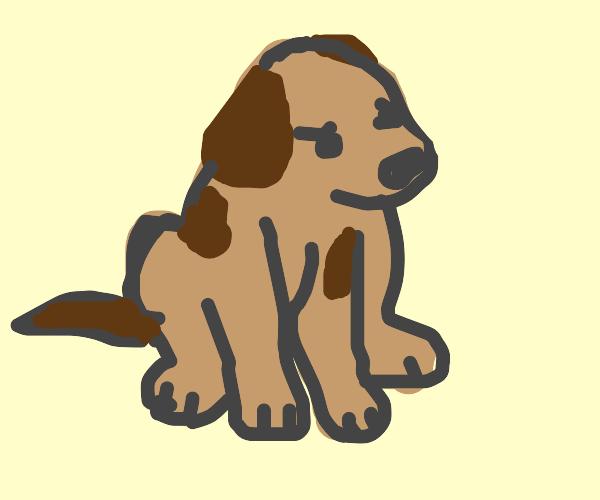 Sit. Bad dog. Bad brown dog.